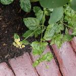 Plant & brick detail, wet