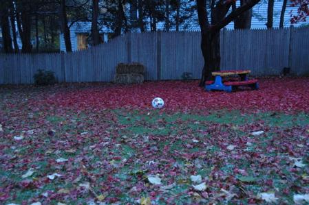 Backyard November 20