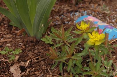 Euphorbia Arises