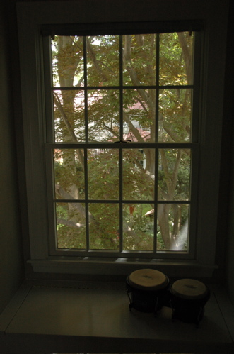 Window seat, maple tree