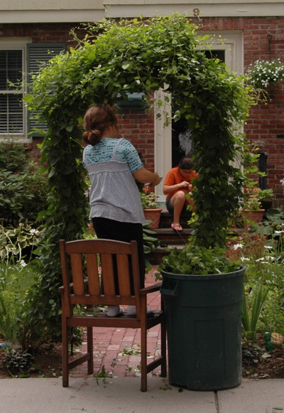Grace, the little gardener, prunes the clematis arbor.