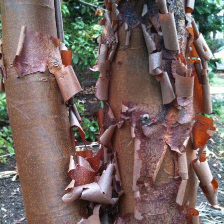 Peeling bark | leaf – stitch – word