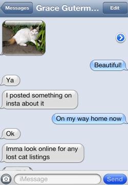cat_text