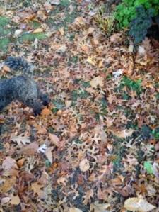 cemetery_dog